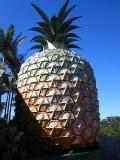 Reuze Ananas