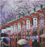 Cherry blossom festival Japan