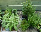 De eerste planten