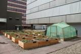 Artikel: Kippetjes op het dak van Hoog Catharijne