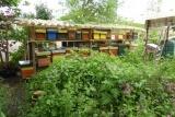 Volksverhuizing: de bijen zijn gearriveerd.