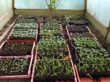 Plantgoed van Hermi voor de Plantdag van 16 mei