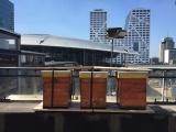 Stadse bijen